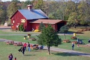 Amazing Farm Fun at Ticonderoga